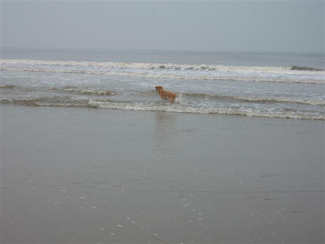 Zeppo is aan het zwemmen