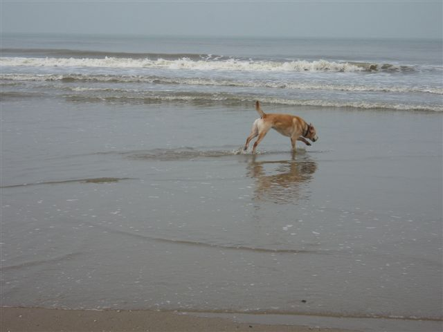Zeppo loopt in zee