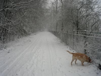 Zeppo in de sneeuw
