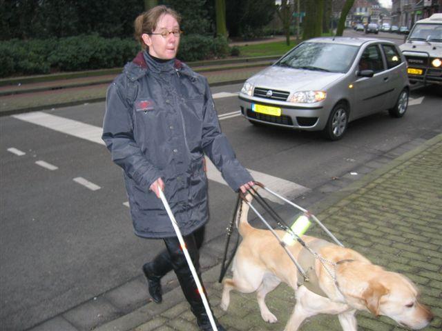 Met blindegeleidehond straat oversteken